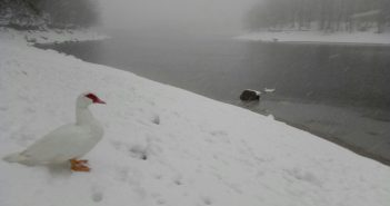 nevada gener 2017 santa fe